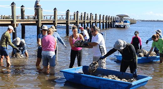 Volunteers oyster bagging