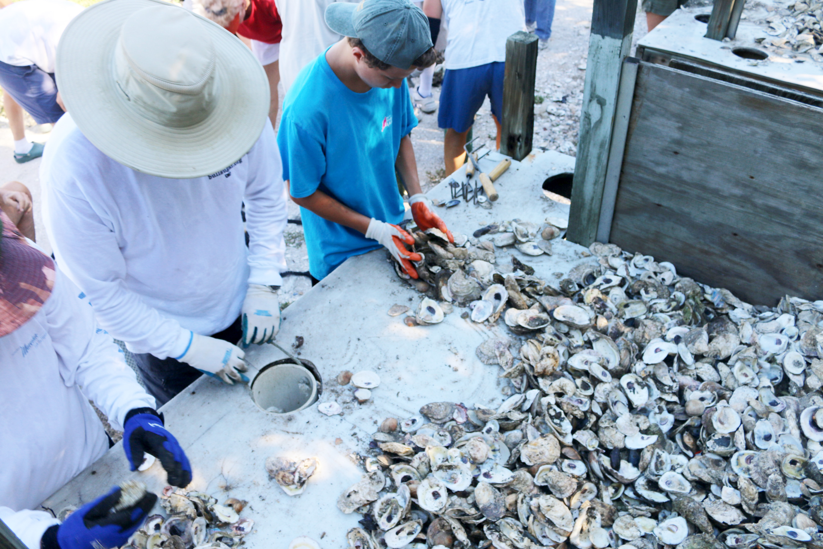 volunteers bagging oyster shells