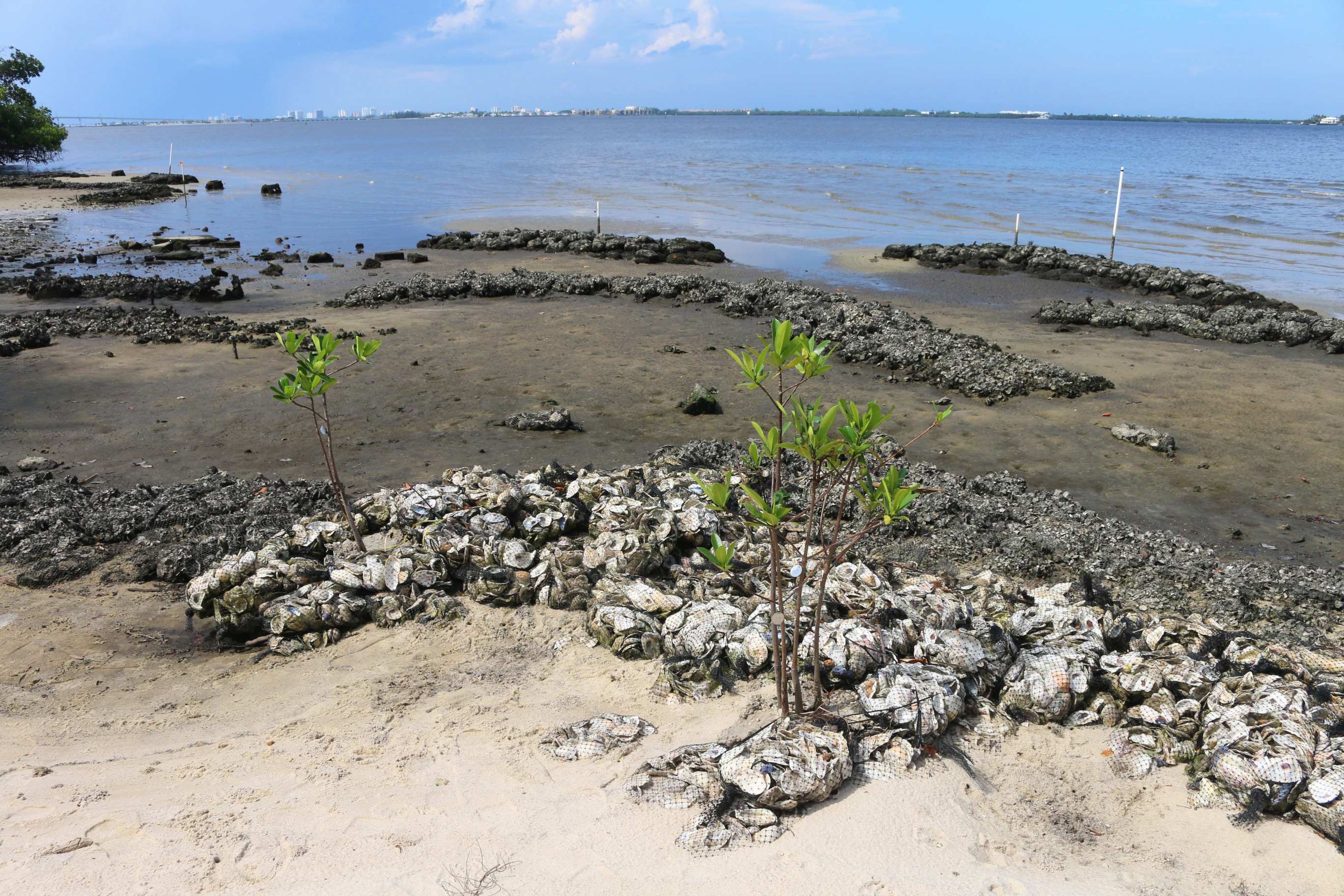 oyster reef site
