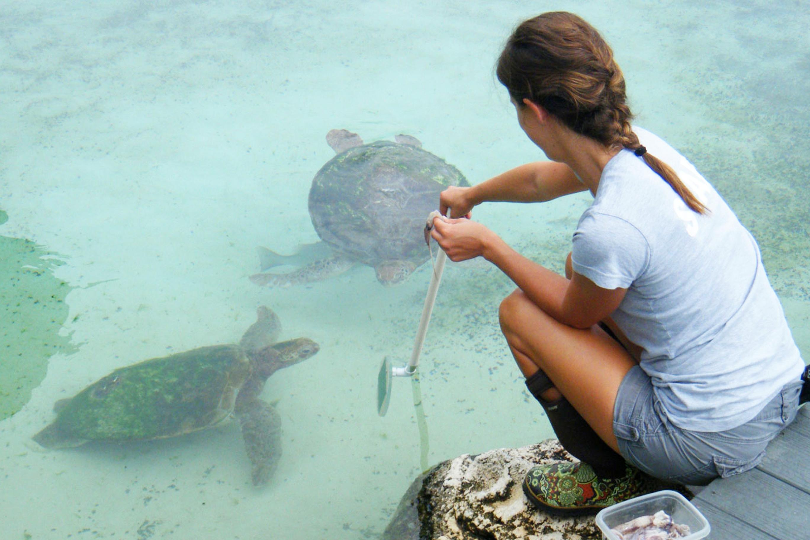 Florida Oceanographic staff feeding our sea turtles
