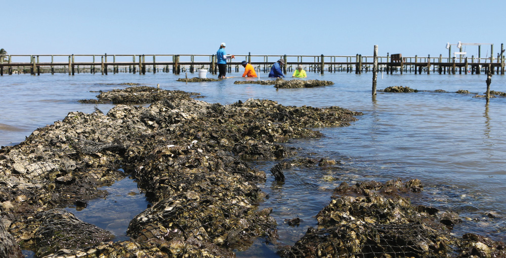 Researchers inside the Indian River Lagoon
