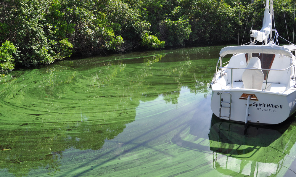 boat surrounded by blue green algae