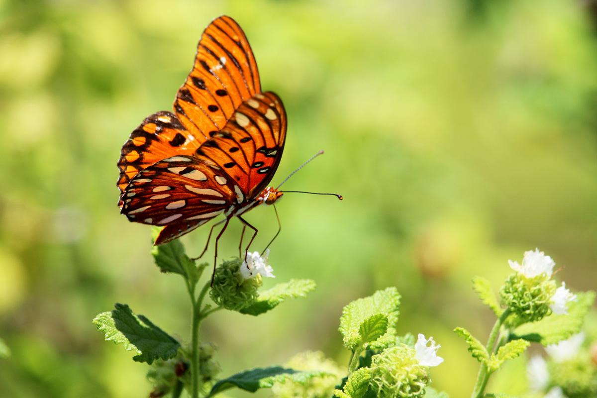 Butterfly inside butterfly garden