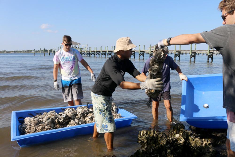 Volunteers deploying oysters