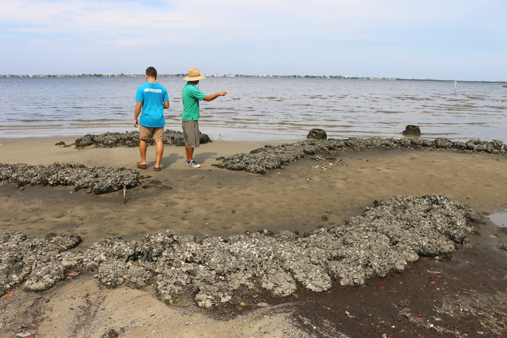 research interns monitoring oyster reef