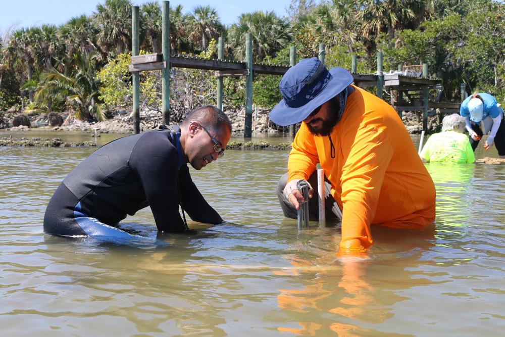 Seagrass deployment