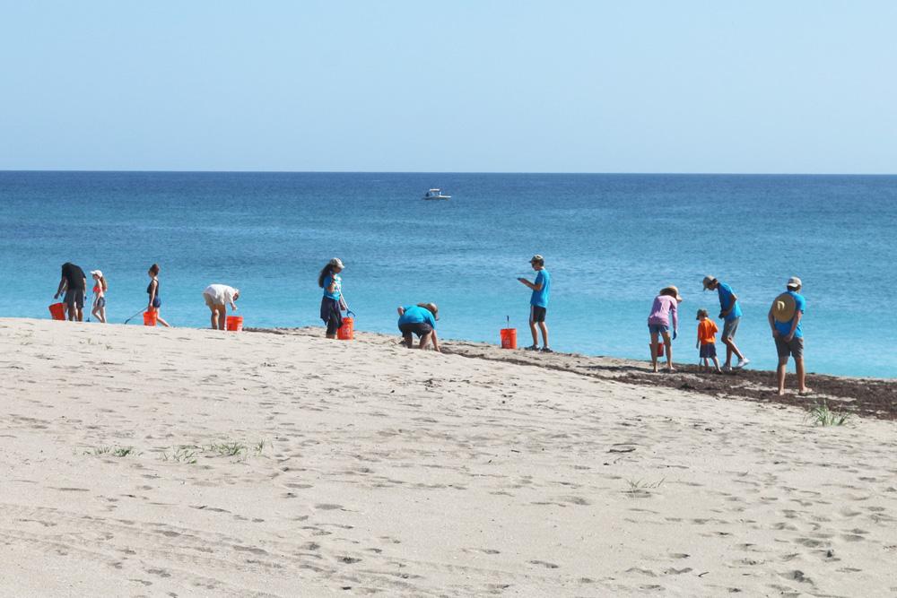 Team ocean volunteers cleaning up the beach