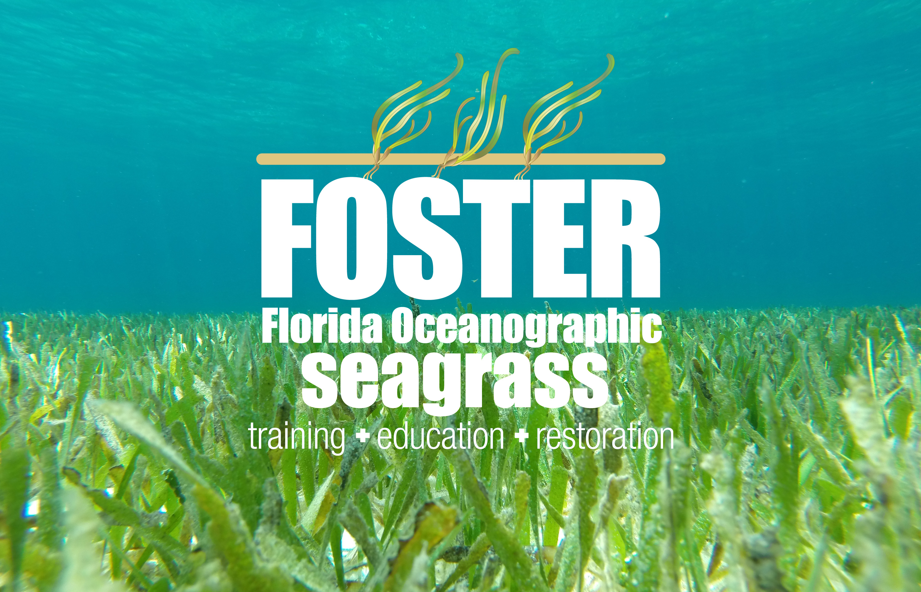 seagrass with foster logo