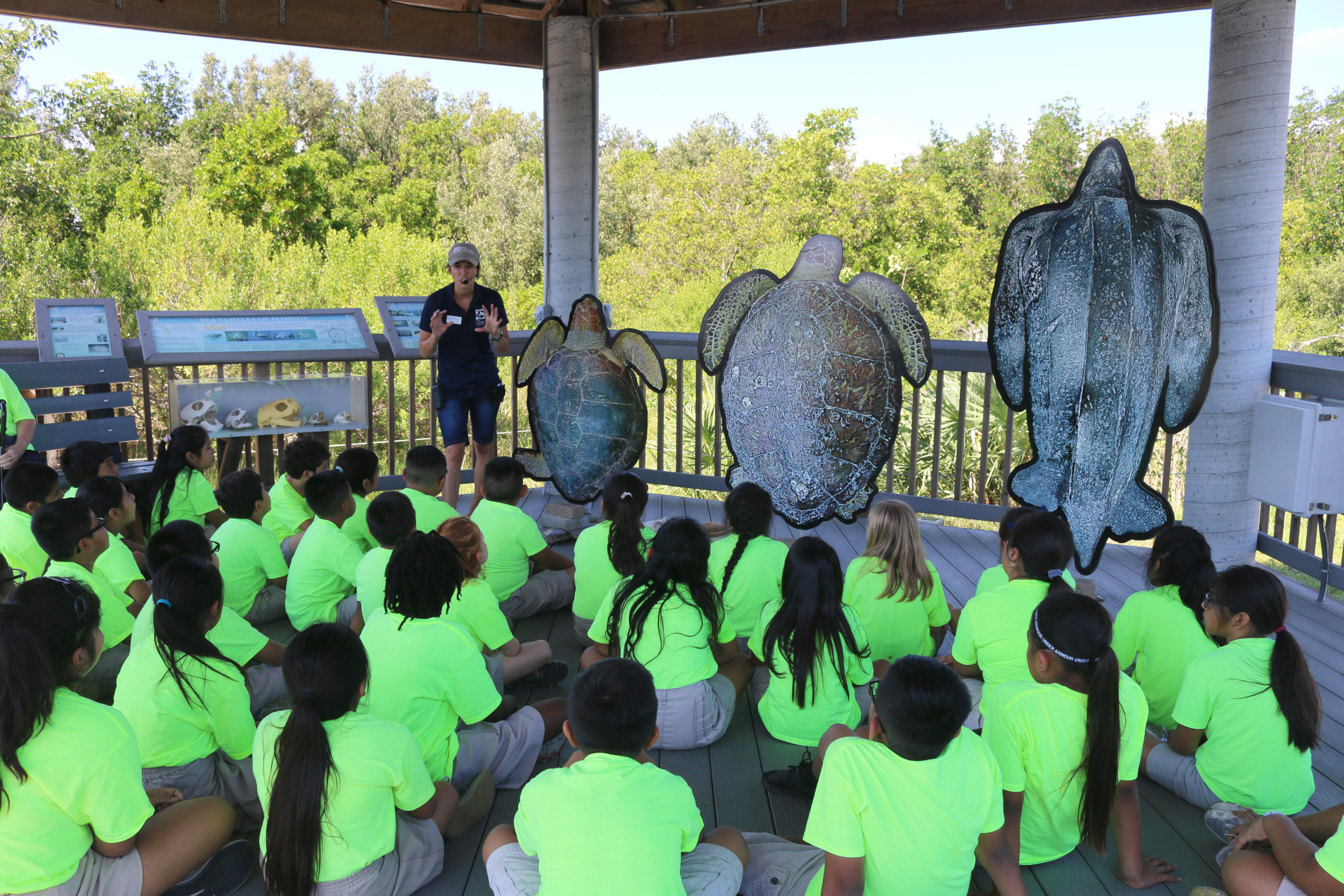 children learning about sea turtles