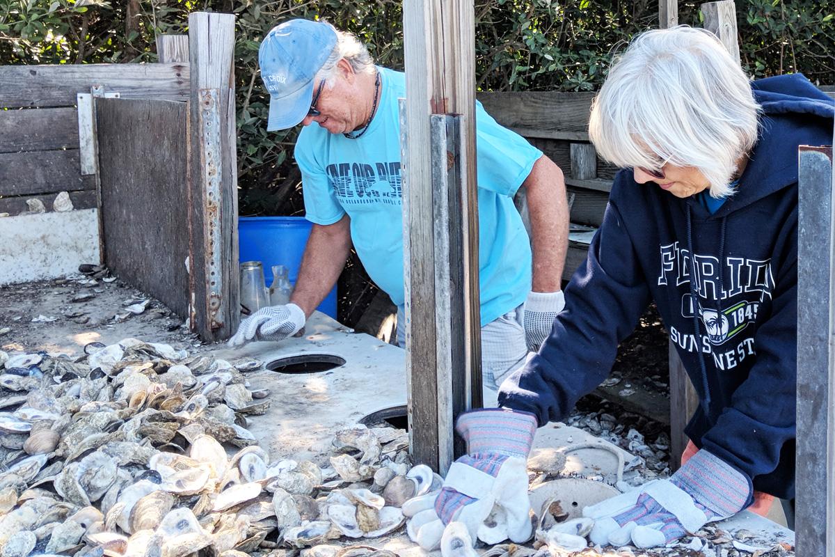 Volunteers bagging oyster shells