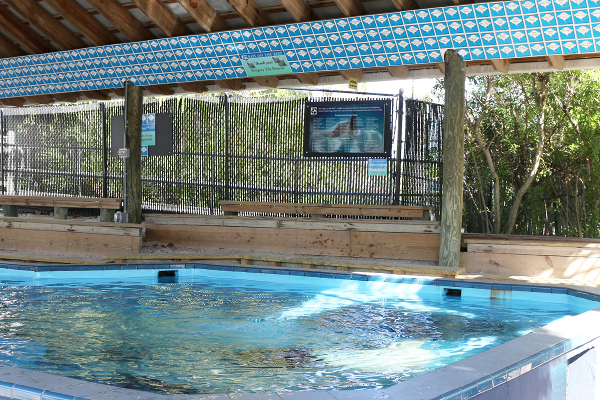 Stingray pavilion with stingray tiles