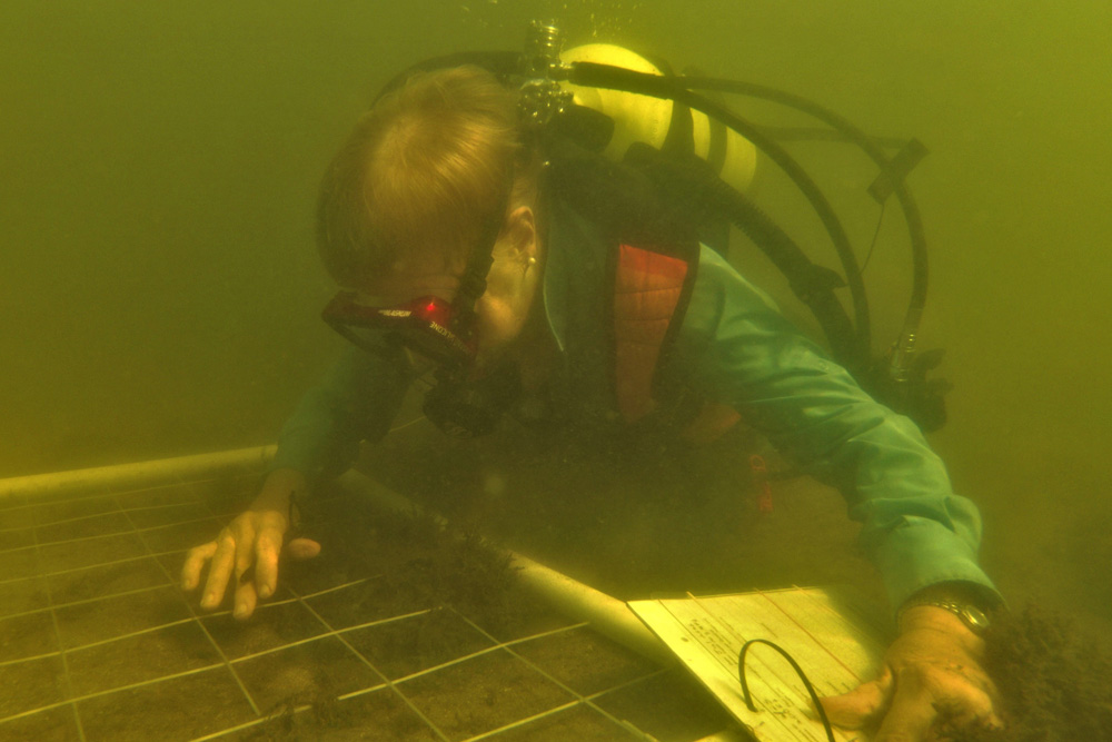 researcher surveying seagrass