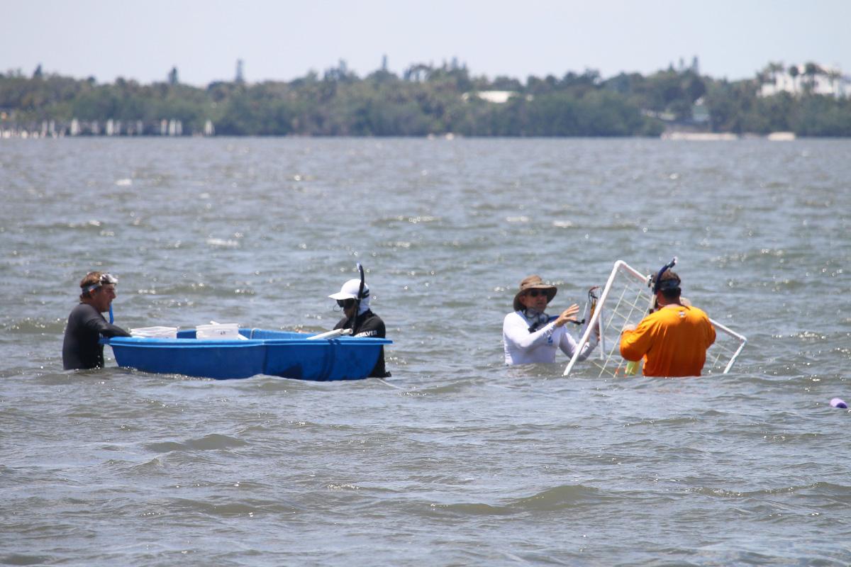 seagrass survey