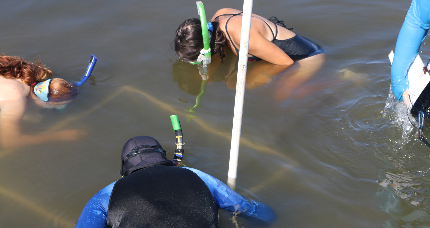 seagrass volunteers snorkeling in the water