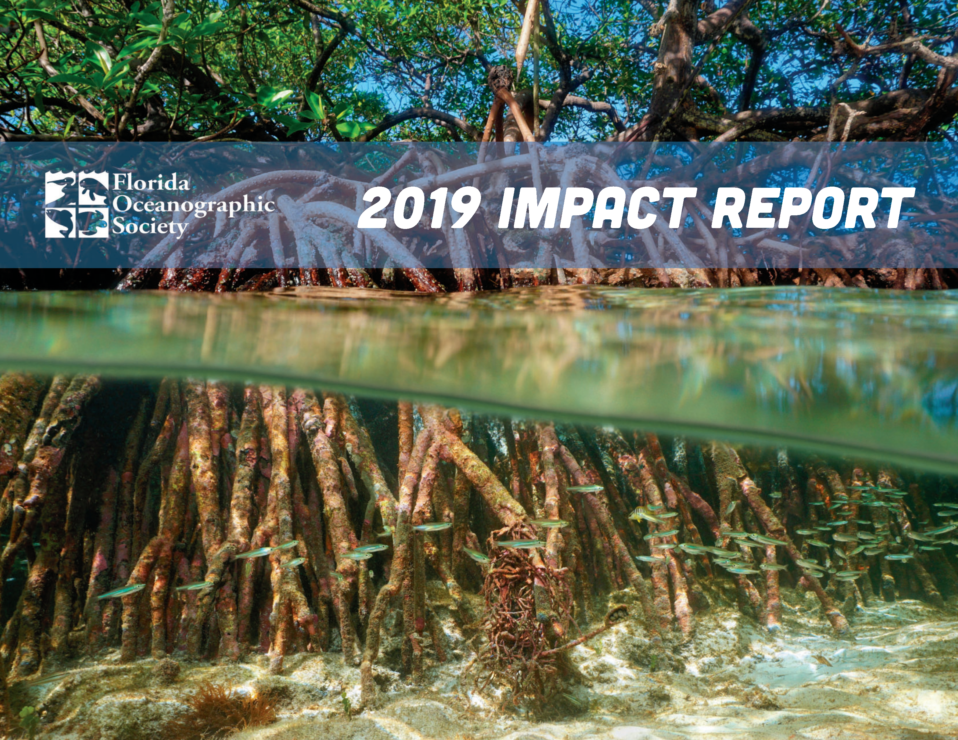 Cover of our 2019 impact report