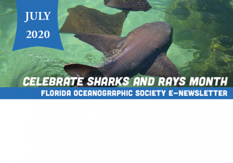sharks and rays month