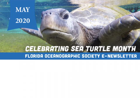 sea turtle month