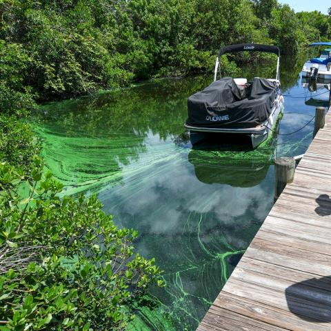 possible blue-green algae on the water
